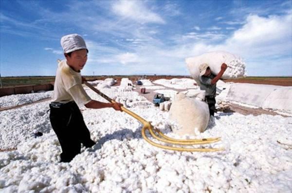 新疆:重点支持南疆纺织服装产业发展